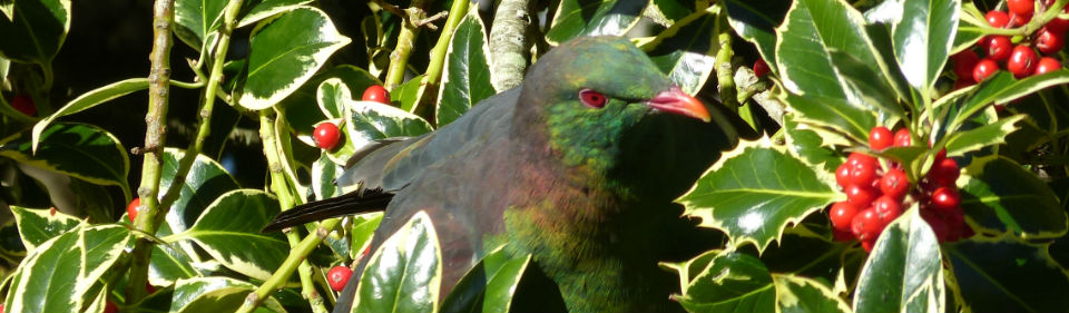 projectkereru.org.nz